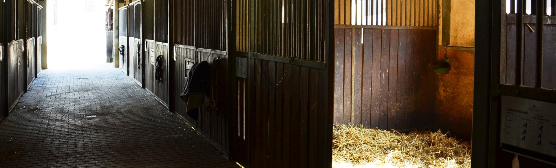 Pferde zum Verkauf